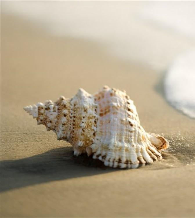 فروش صدف های دریایی